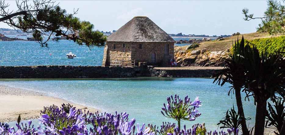 Bréhat, l'île aux fleurs des Côtes d'Armor #5