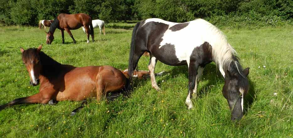Du cheval, en forêt de Brocéliande #1