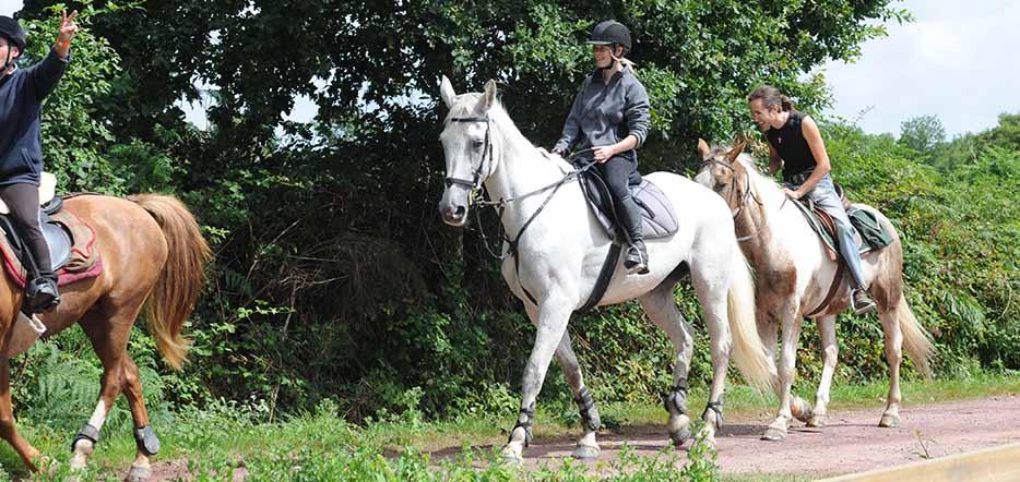 Du cheval, en forêt de Brocéliande #3