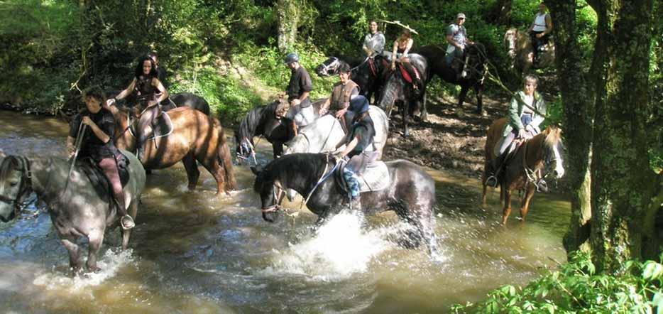 Du cheval, en forêt de Brocéliande #4