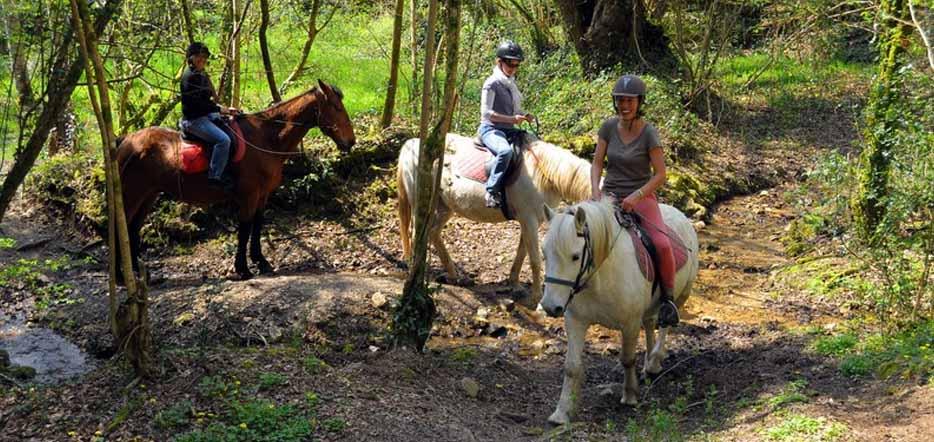 Du cheval, en forêt de Brocéliande #5